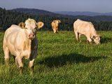 L'élevage intensif submerge les agroécosystèmes